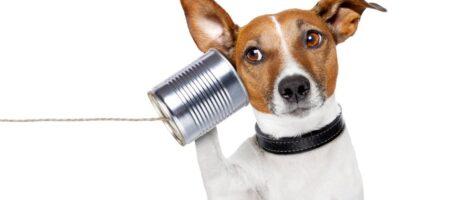 Expertise doelgroep communicatie